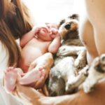 introducing-your-pet-to-your-newborn-RM-article